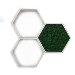 obraz z chrobotka heksagon ramka