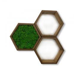 ramka heksagon obraz z mchu