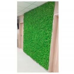 zielona ściana mech chrobotek